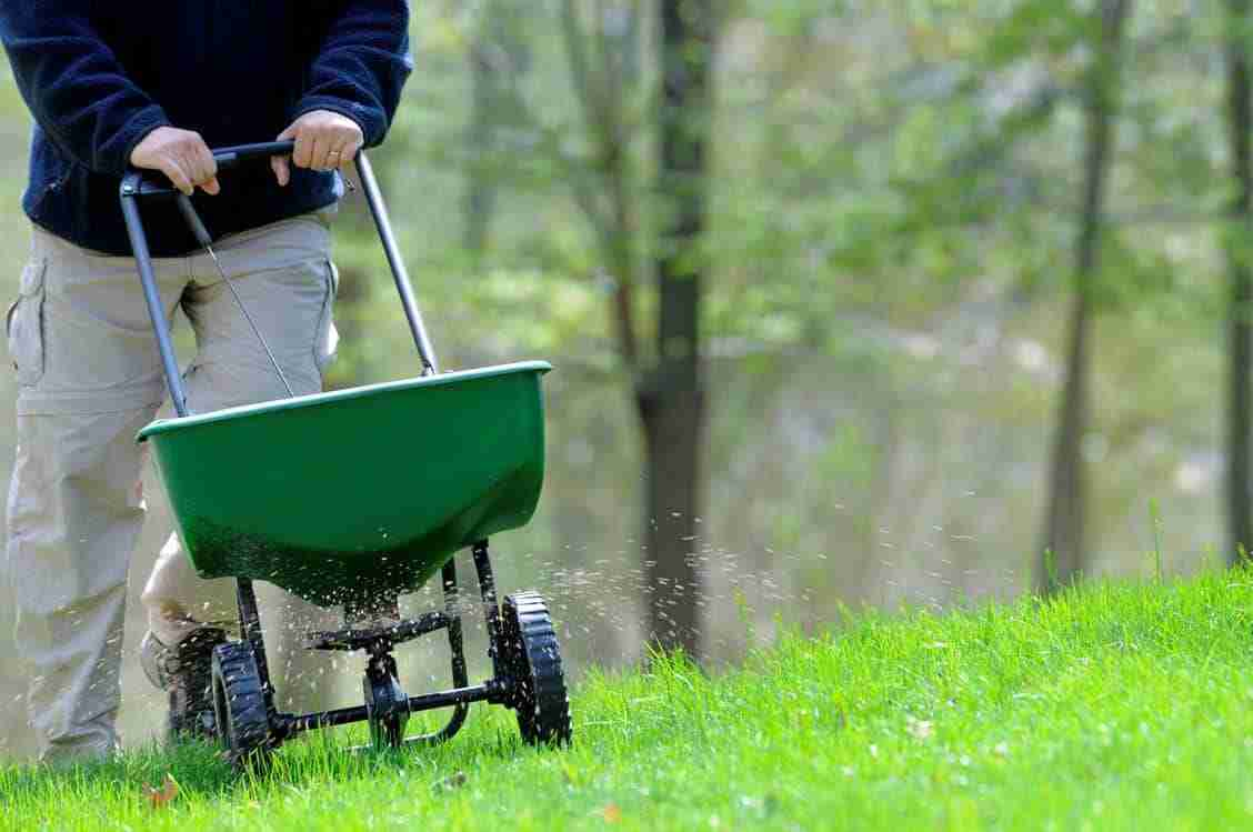 Best Lawn Fertilizer Review