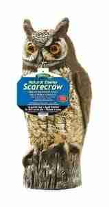 decoy owl to scare birds