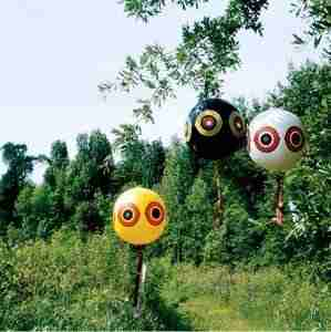 scare birds with terror eye balloons
