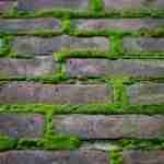 how to get rid of moss between pavers