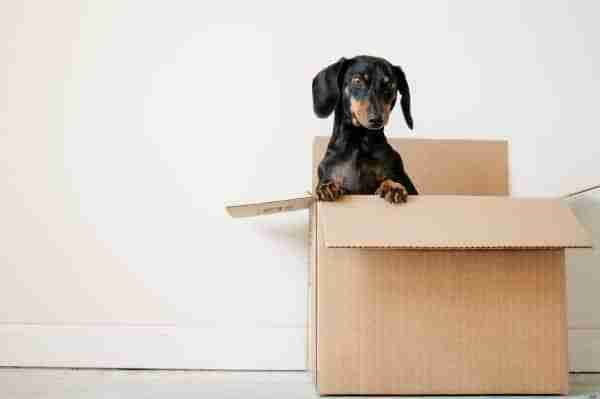 tips for moving to a new house with pets