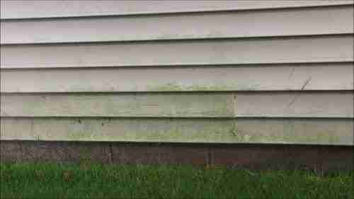 mildew and mold on house's vinyl siding