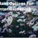 10 best plant options for winter gardening