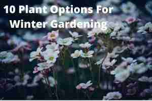 10 Plant Options For Winter Gardening