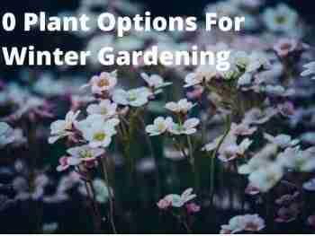 10 best plant options for winter gardening