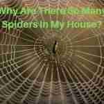 Why are there so many spiders in my house?