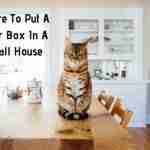 Where to put a litter box in a small house